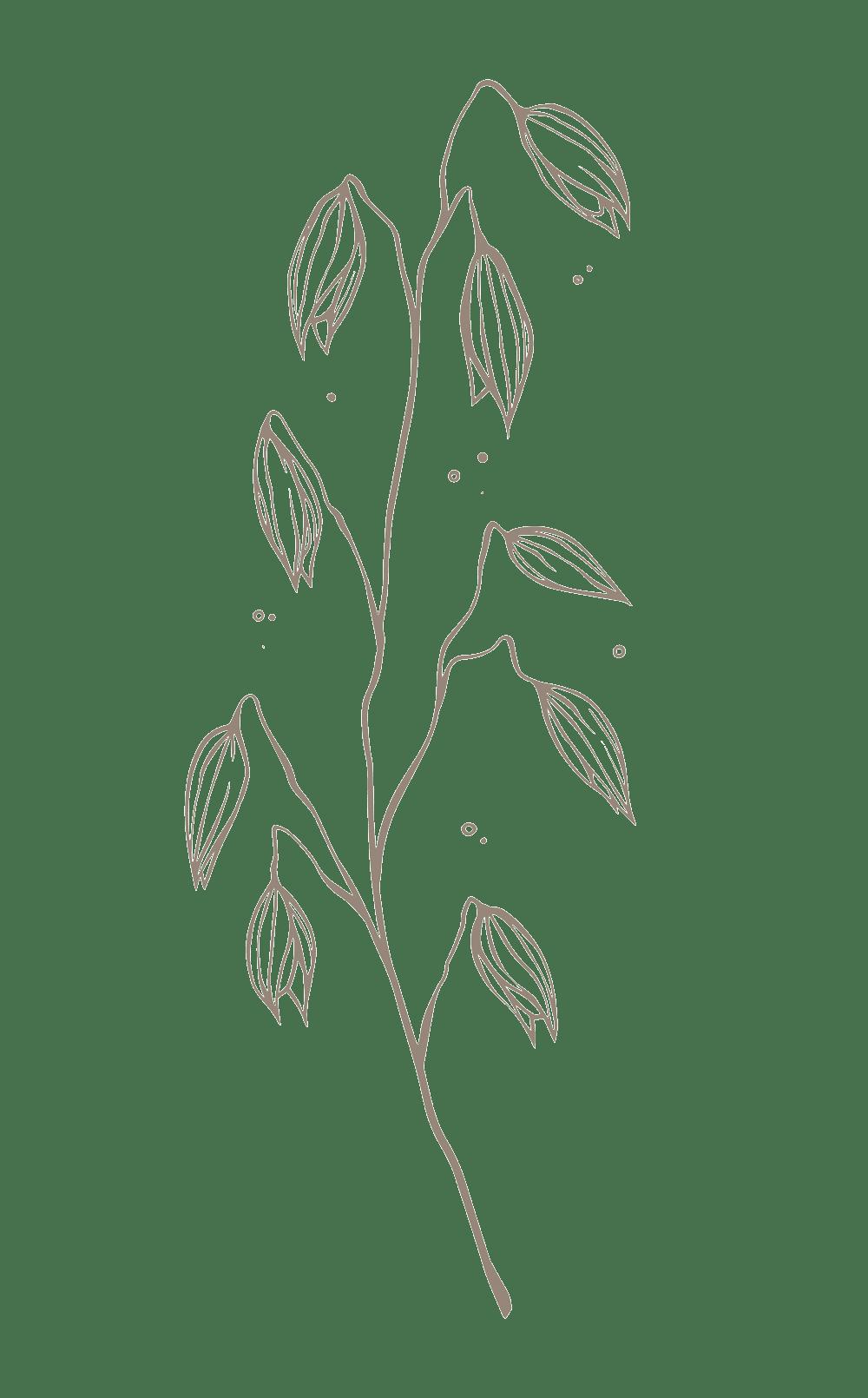 rimita-green-ingredients-web-kaura