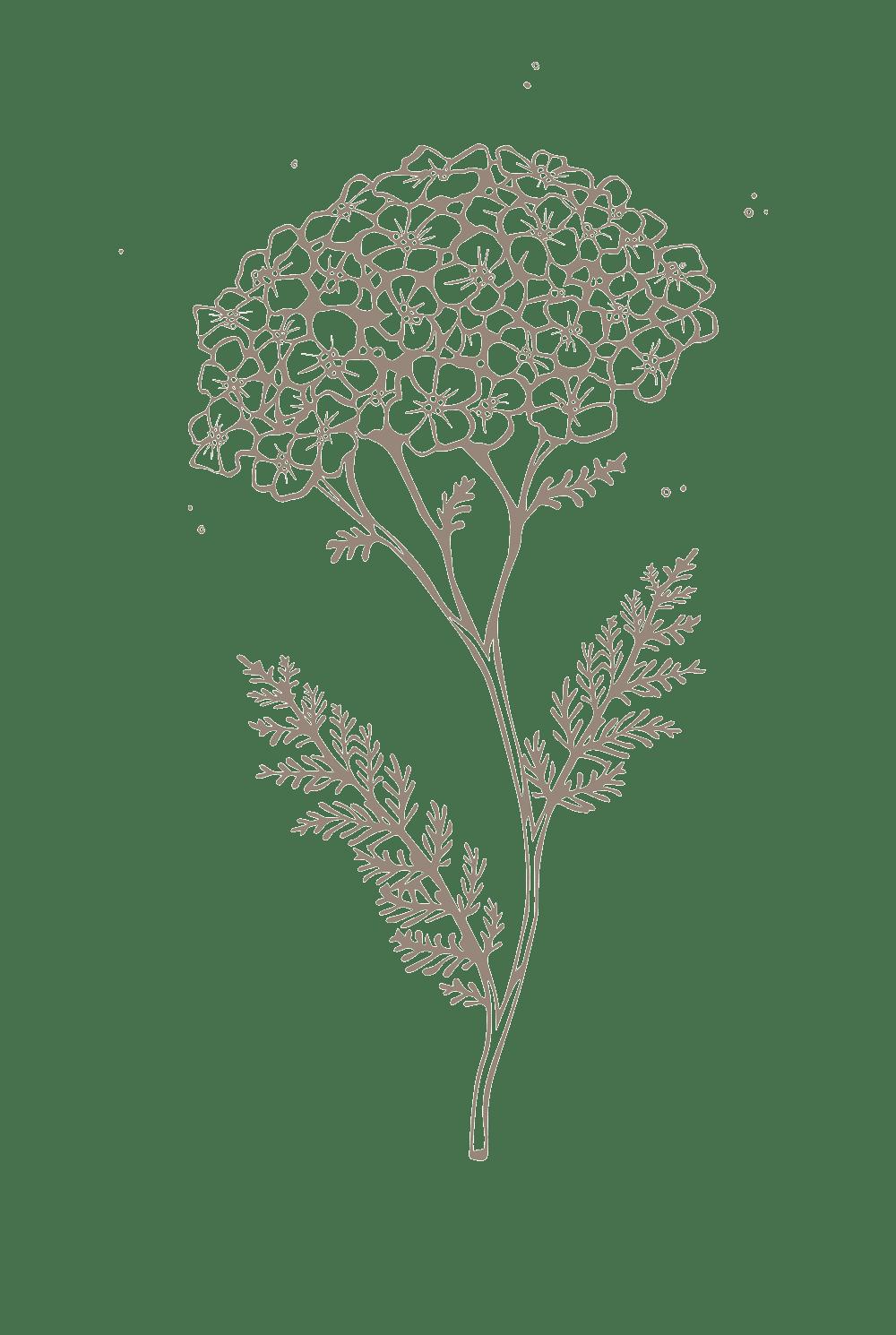 rimita-green-ingredients-web-siankärsämö